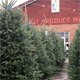 Hillbilly Produce Market Christmas Tree Lot